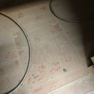We have some nocturnal friends...look closely at the prints in the dust